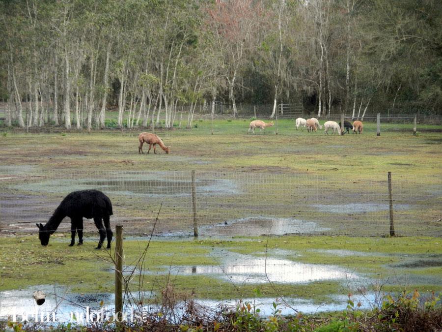 Llama-Farm